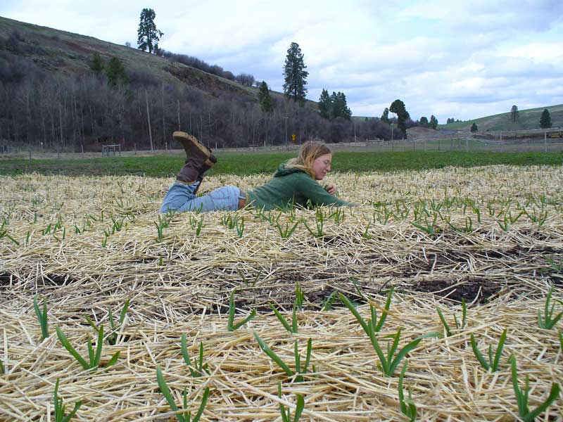 Grey Duck Garlic: Patty relaxes in a field of garlic