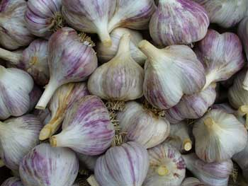 Siberian box of garlic