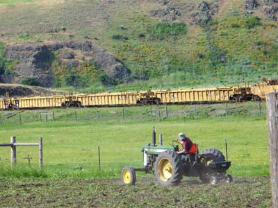 Grey Duck Garlic, Plowing under and reseeding the fallow garlic field